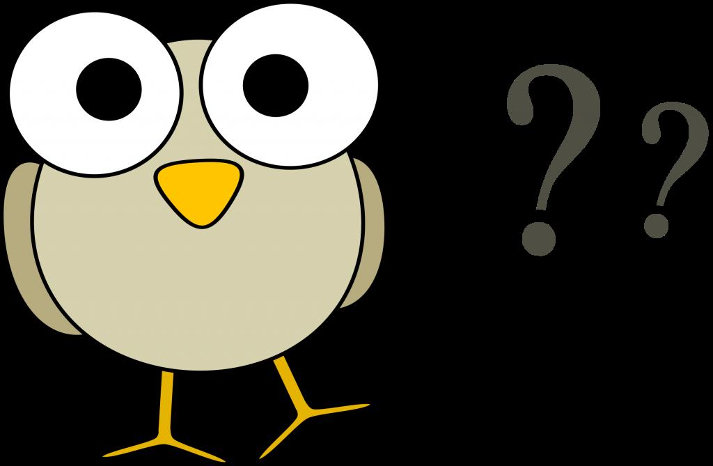 Birdie has questions